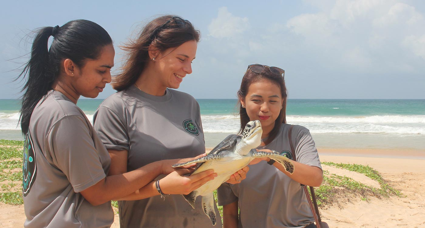 Releasing of adorable turtles back into the ocean