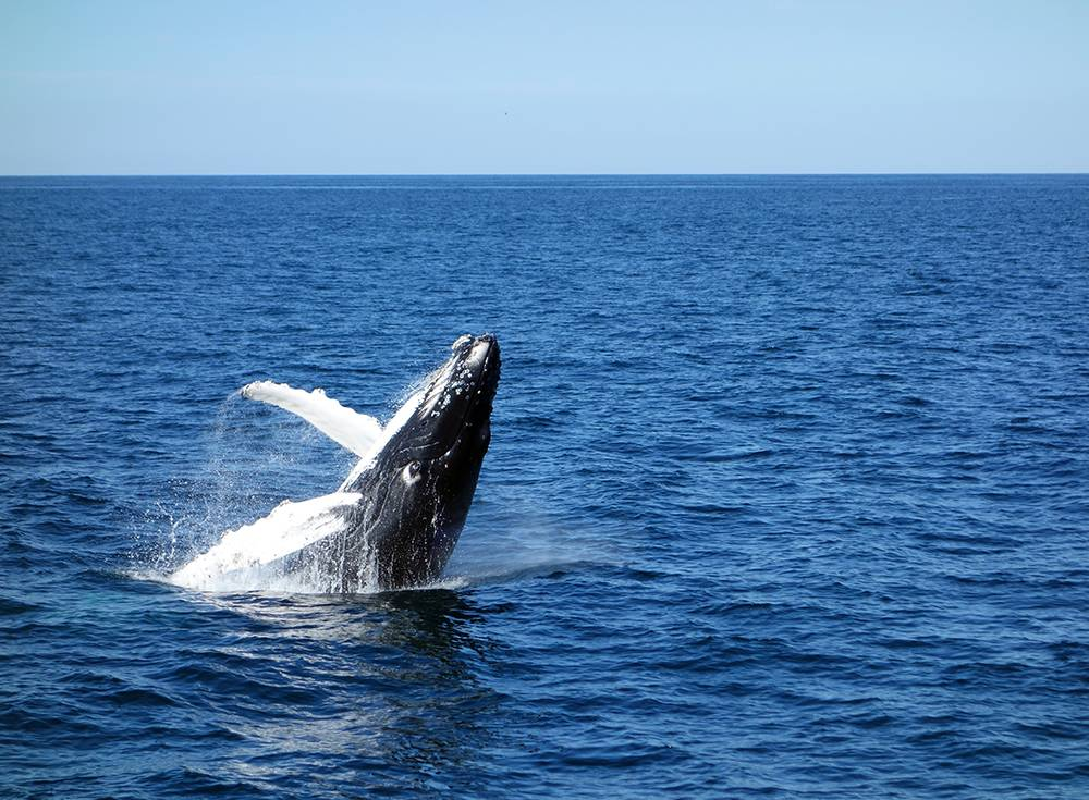 Whale Watching Experience In Galle with Fortress Resort & Spa, Koggala