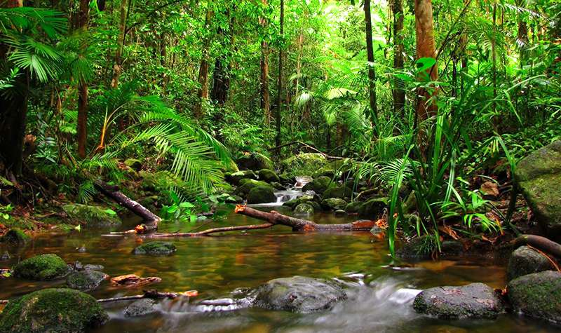 Vibrant Nature of Sinharaja Rainforest